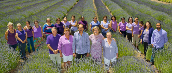hm-slide-staff-in-lavender-field